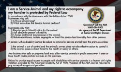 Service Dog Cards – 50 ADA Service Dog Information Cards State Your Rights