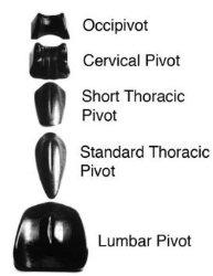 Pivotal Therapy Occipivot – Pivotal Therapy System Component