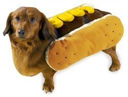 Casual Canine Hot Diggity Dog Mustard Costume, Medium