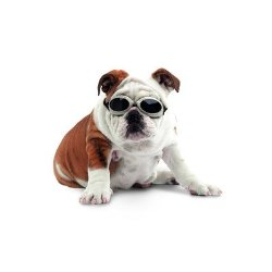 Doggles Dog Goggles ILS With Skull Crossbones/ Smoke Lens – Small