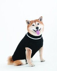 Fashion Pet Lookin Good Classic Cable Sweater for Dogs, Medium, Black