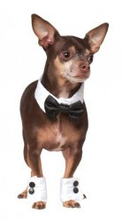 Rubies Costume Company Bowtie and Cuff Pet Accessories Set, Medium/Large