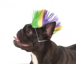Rubies Costume Company Mardi Gras Pet Mohawk Wig, Medium/Large
