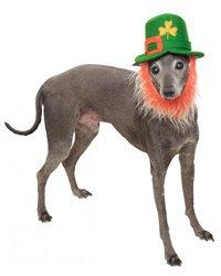 Rubies Costume Company St. Patty's Day Pet Hat with Beard, Medium/Large