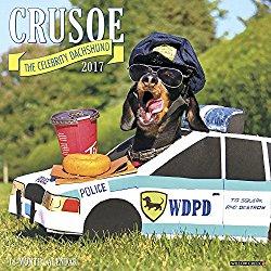 Crusoe the Celebrity Dachshund 2017 Wall Calendar